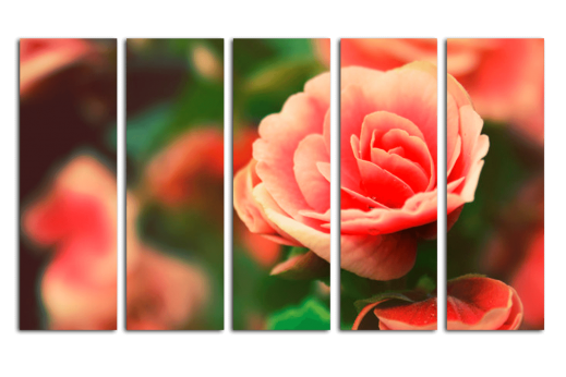 Модульная картина Роза с каплями росы